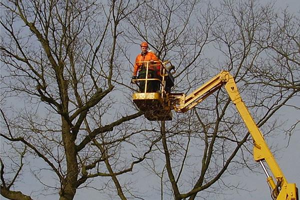 Baumpflege Rostock