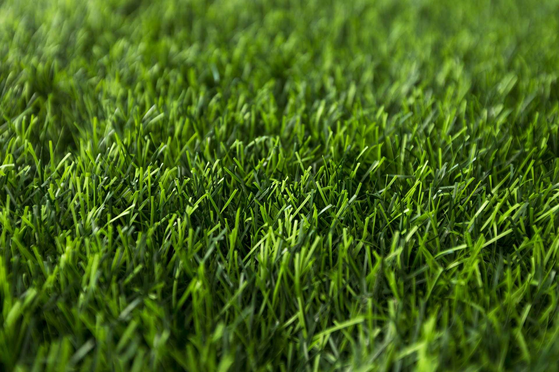Mähroboter Rasen schneiden